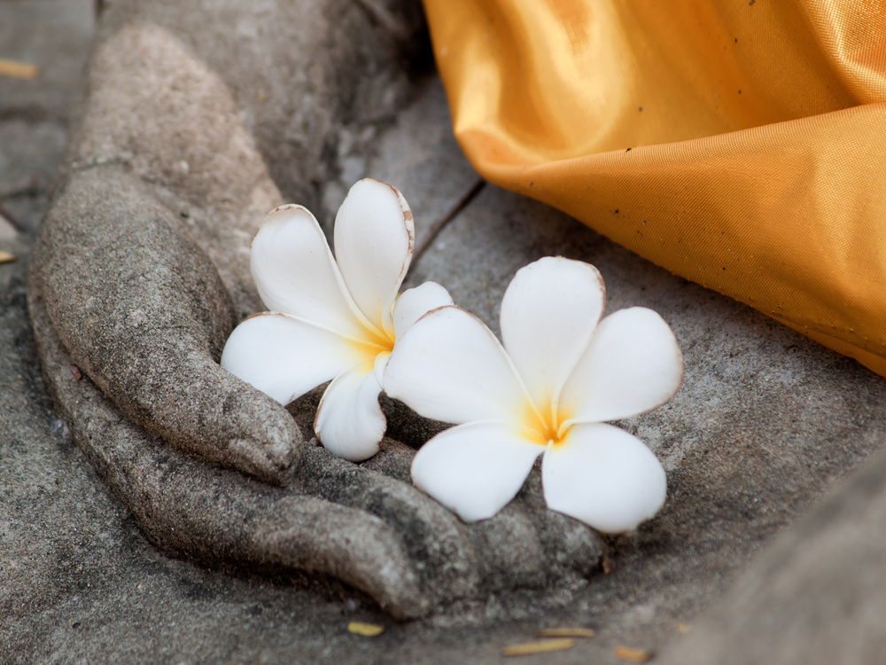 plumeria flower on ancient hand of buddha statue